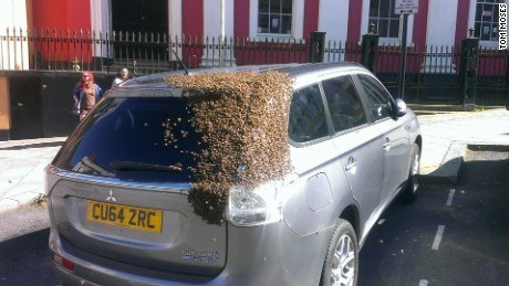 Bees-Chase-Car-4